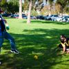 CSUF_Picnic2010_057